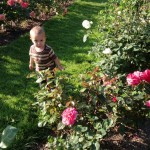 Milo smiling and walking around in the rose garden.